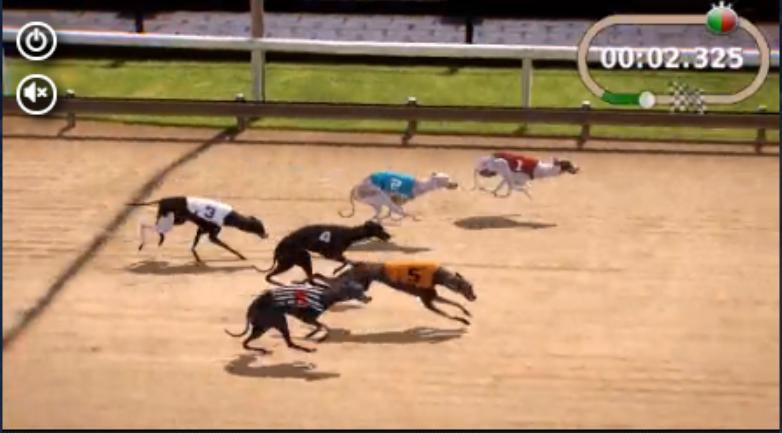 sts wyścigi psów